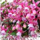 Eddy-Endah Store 100pcs/bag Fuchsia Seeds, Fuchsia Flowers,Lantern Flower, Begonia Flower,Seeds Flow