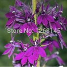 Eddy-Endah Store 500pcs Purple Flower Lobelia vedrariensis Bonsai - DIY Home Garden