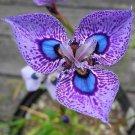 Eddy-Endah Store 200 seeds Phalaenopsis Butterfly Orchid Seeds Flower Seeds,Orchid Plants,Orchid Pla