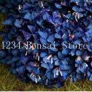 Eddy-Endah Store 100 pcs Sensitive Plant Grass Flower Bonsai, Four Leaf Lover Bonsai, Sensitive Plan