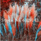 Eddy-Endah Store 150 pcs Rare Colorful Pampas Grass Cortaderia Seed are Very Beautiful Garden Flower