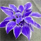 Eddy-Endah Store 120Pcs Colorful Hosta Seeds Perfect Color Perennials Plantain Mixed Beautiful Lily