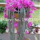 Eddy-Endah Store 100 pcs Climbing Plant Echinopsis Tubiflora Flowering Cactus Bonsai Plant Rare Flow