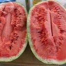 Eddy-Endah Store Jubilee Sweet Watermelon Seeds, 75+ Premium Heirloom Seeds 1500 Seeds