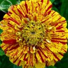 Eddy-Endah Store   50PCS 6 Types Of Colourful Zinnia Flowers Seeds Perennial Home Garden plant Beaut