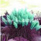 Eddy-Endah Store 200 Seeds Pampas Grass G2, Mixed Colors Purple, Pink, Cream, Orange Cream White T3