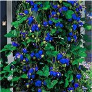 Eddy-Endah Store 500Pcs Blue Strawberry Seeds