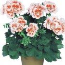 Eddy-Endah Store 100 Pcs Mini Geranium Dwarf Bonsai Perennial Flower Indoor Plant Bonsai Pelargonium
