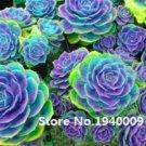 Eddy-Endah Store 100 Pcs Rainbow Succulent Bonsai Seedling Perennial Office Mini Bonsai Plant Succul