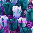 Eddy-Endah Store High-Grade 50pcs/Lot Tulip Bonsai Flowers Wedding Home Decorative Flowers Home Deco
