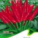 Eddy-Endah Store Original Pack Hot Chilli Sweet Pepper Seeds C025