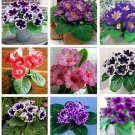 Eddy-Endah Store New 9 Colors Gloxinia Seeds Sinningia Gloxinia Flower 100+ Seeds Mix