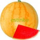 Eddy-Endah Store Heirloom 'Huang Pi Qiu' Yellow Skin Red Seedless Watermelon Seeds 13% Sugar Sweet J