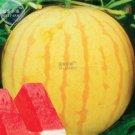 Eddy-Endah Store New Heirloom Yellow Skin Red Seedless Watermelon Seeds 5 Seeds