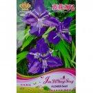 Eddy-Endah Store Rhizoma Iridis Orris Root Blue Flowers Seeds, 30 Seeds / Pack, Original Pack 1000 P