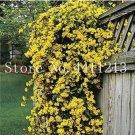 Eddy-Endah Store 100 pcs Climbing Jasmine Plant Rare Flower Bonsai Perennial Indoor Outdoor Plants D