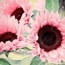 Eddy-Endah Store Water Pink Sunflower Seeds 300 Seeds
