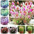 Eddy-Endah Store   Purple Rare Rabbit's Tail Grass Seeds, 100 Seeds / Pack, Lagurus ovatus Ornamenta