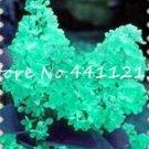 Eddy-Endah Store 100Pcs Purple White Lilac Bonsai Lilac Clove Bonsai Flower Bonsai Tree Bonsai Potte