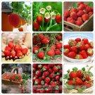 Eddy-Endah Store   Heirloom 9 Varieties of Red Organic Strawberry Seeds, Professional Pack, 100 Seed