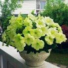 Eddy-Endah Store   200PCS 'Xihe Lv' Fully Green Petunia Annual Flowers Seeds, Big Petals Compact Den