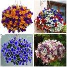 Eddy-Endah Store   200PCS Rare Morning Glory Flowers Seeds Very Beautiful Perennial Flowers Home Gar