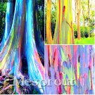 Eddy-Endah Store Rare Rainbow Tree Seeds Eucalyptus Deglupta Mindanao Gum Home Garden giant tree see