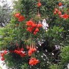 Eddy-Endah Store   Mixed 9 Types of Passiflora Flowers Big Hanging Bonsai Flower Seeds 20pcs Interes