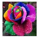 Eddy-Endah Store 100pcs/bag Rare Holland Rainbow Rose Flowers Lover Colorful Perennial Flower Garden