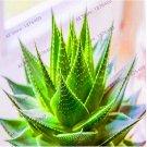 Eddy-Endah Store 100 PCS Mulit -Color Aloe Vera Garden Rare Herbs Flores Tree plantas Bonsai Indoor