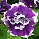 Eddy-Endah Store 200 pcs/Pack Bonsai Petunia Garden Bonsai Moon Night Sky Double Purple Flowers Purp