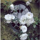 Eddy-Endah Store 100 Pcs Thailand Climbing Beautyful Rose Bonsai Flowers Rare Mutli-Color Rose Bonsa