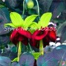 Eddy-Endah Store Mixed Colors Lantern Flower Indoor Balcony Bonsai Flower Fuchsias Plant - 100 Pcs f
