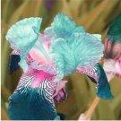 Eddy-Endah Store 100 PCS Iris Flower Bonsai Flore 24 Colours Heirloom Blooming Tectorum Perennial Fl