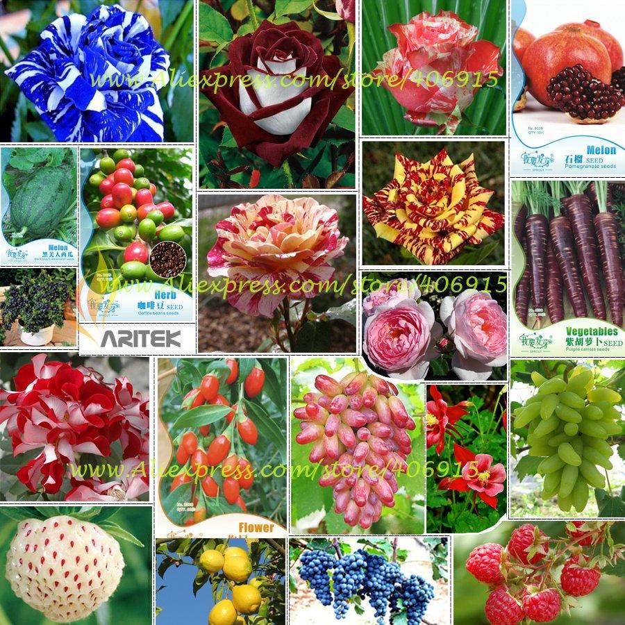 Eddy-Endah Store Hot Sales!!! Big Discount!!! 20 Kinds of Seeds, including Rose, Fruits, Goji, Coffe