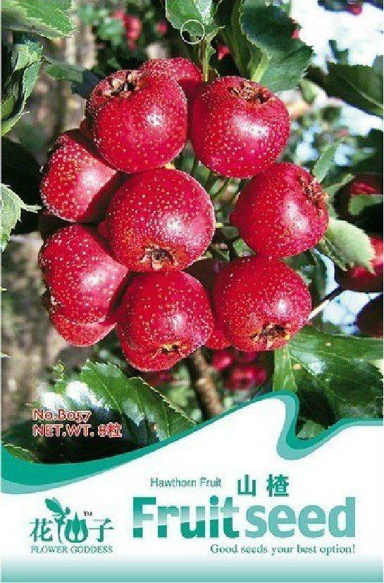 Eddy-Endah Store 5 Original packs, 8 seeds / pack, Hawthorn seeds, Fructus Crataegi, Herbs Maybush S