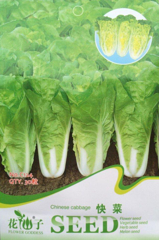 Eddy-Endah Store Heirloom Chinese Cabbage Wong Bok Vegetable Seeds, Original Pack, 30 Seeds / Pack,