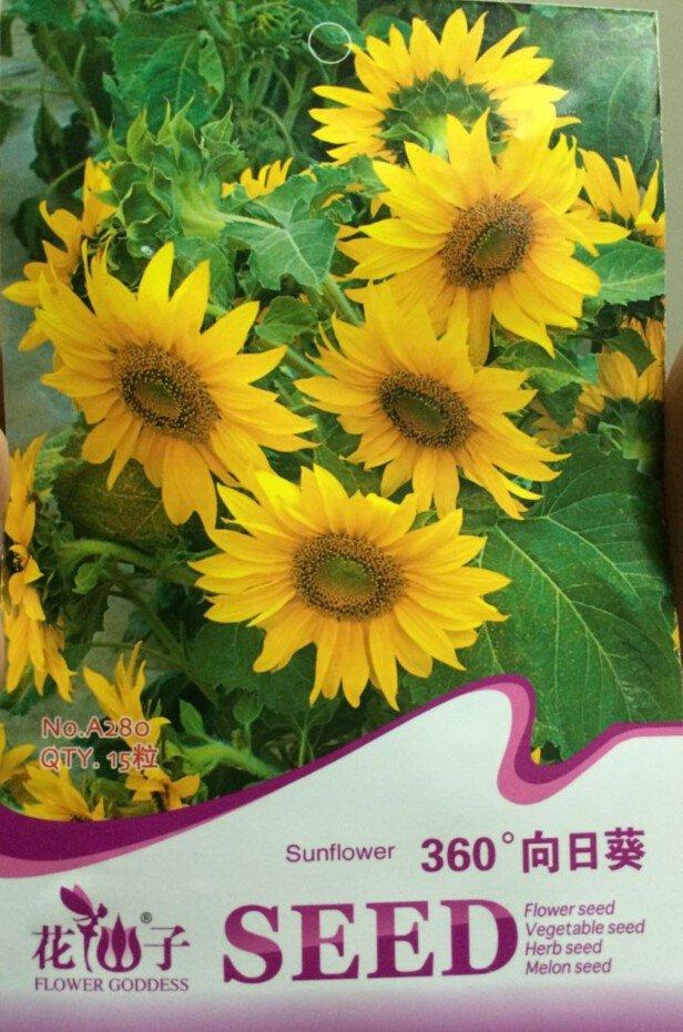 Eddy-Endah Store Rare Clusters of Sunflower Seeds, Original Pack, 15 Seeds / Pack, Very Interesting