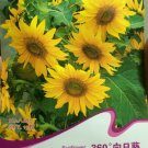 Eddy-Endah Store Rare Clusters of Sunflower Seeds, Original Pack, 15 Seeds / Pack, Very Interesting