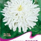 Eddy-Endah Store 1 Original Pack, 50 seeds / pack, Zinnia Youth-and-Old-Age White Flower Seed #A147