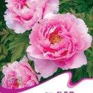 Eddy-Endah Store 1 Original Pack, 6 seeds / pack, Pink Chinese Luoyang Peony Mudan Seeds