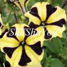 Eddy-Endah Store 200Pcs Hanging Petunia Bonsai Flower Blue Morning Glory Bonsai,Rare Color Petunia F