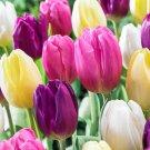 Eddy-Endah Store 10PCS Imported Hydro Tulip Bulbs Fresh Garden Bulbs All Season Planting Available T