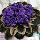 Eddy-Endah Store 100 Pcs Mini Violet Beautiful Bonsai Flower, African Red Purple Mini Sky Blue Viole