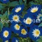 Eddy-Endah Store 100 Pcs/Bag Rare StarBlue Bonsai Garden and Patio Potted Plant Morning Glory Flower