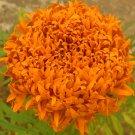 Eddy-Endah Store   Tagetes erecta Purple Orange White Red Bonsai Flowers, 100 Seeds Big Blooms Frenc