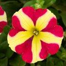 Eddy-Endah Store 200PCS Petunia 'Amore Queen of Hearts' Seeds sh336Q