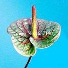 Eddy-Endah Store 100 Pcs/Bag Rare Flower Plant Anthurium Bonsai Balcony Potted Plant Anthurium Flowe