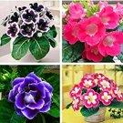 Eddy-Endah Store 100pcs Rare Colorful Flower Mini Gloxinia Flores Perennial Flowering Plants Sinning