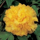 Eddy-Endah Store   Peony 'Goden Years' Gold Flowers Seeds 5PCS Heirloom Big Fragrant Double Flowers